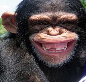 улыбка примата